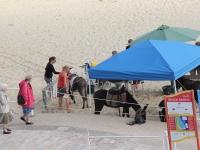 Donkey rides opposite bayview hotel