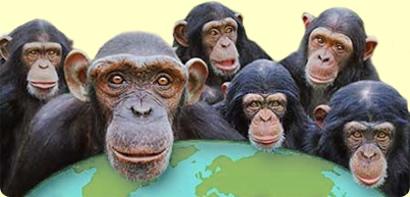Monkey World – Bay View Hotel, Weymouth